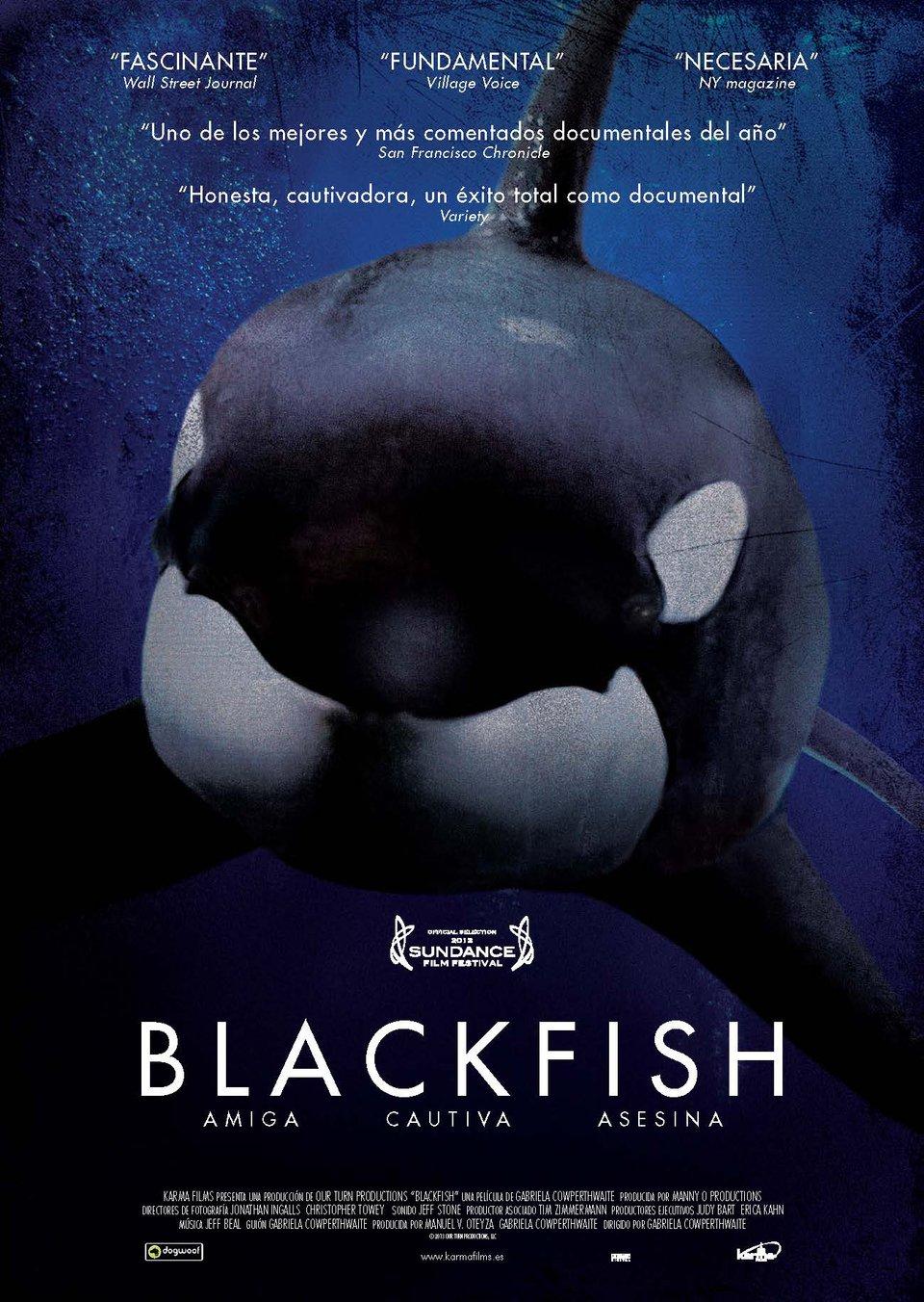 «Черный Дельфин Документальный Фильм Смотреть Онлайн» — 2013