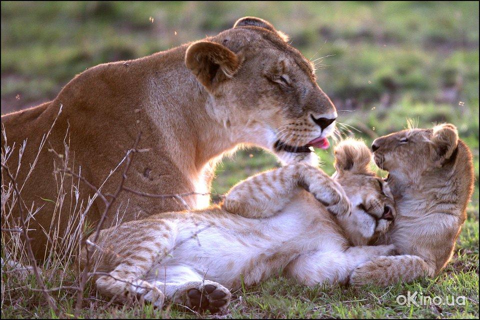 Создание семьи в мире животных! (очень интересно и познавательно)