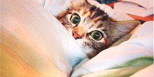 Звезды в соцсетях: Джаред Лето на канате, постельный кот и проклятье доктора Хауса