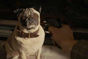 Коубы недели: туалет Чубакки, Том Харди спасает собак и пингвины
