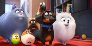 Стоит ли смотреть: «Тайная жизнь домашних животных»