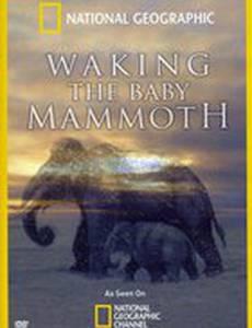Мамонтёнок: Застывший во времени