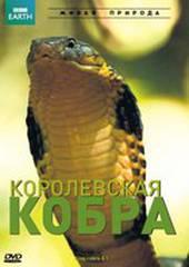 BBC: Королевская кобра
