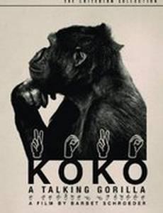 Коко, говорящая горилла
