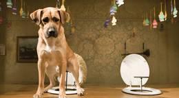 """Кадр из фильма """"Отель для собак"""" - 1"""