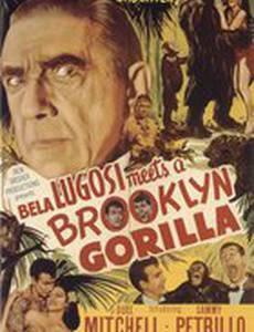 Бела Лугоши знакомится с бруклинской гориллой
