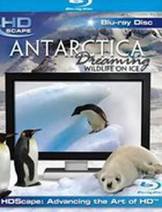 Антарктика – Дикая жизнь на льду