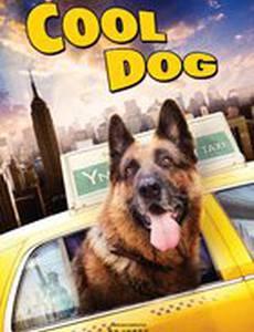 Великолепный пес (видео)