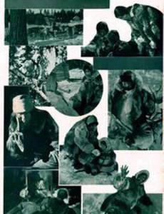 Закон сибирской тайги