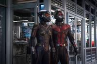 Кадр Человек-муравей и Оса