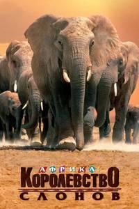 Постер Африка – королевство слонов