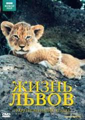 BBC: Жизнь львов