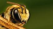 Фильмы про насекомых