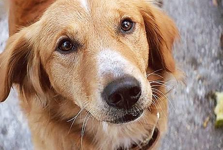 Стоит ли смотреть: «Собачья жизнь» («Жизнь и цель собаки»)