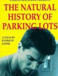История о парковочных местах