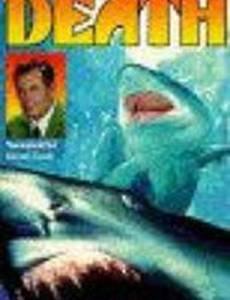 Акулы – пираты глубин