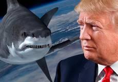 Дональда Трампа приглашали сняться в «Акульем торнадо»