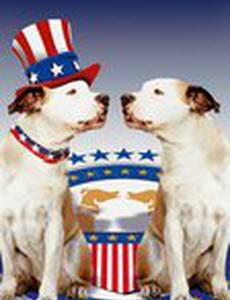 Пес и нищий
