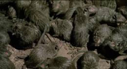 """Кадр из фильма """"Крысы: Ночь ужаса"""" - 2"""