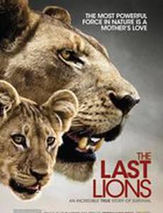 Последние львы (видео)