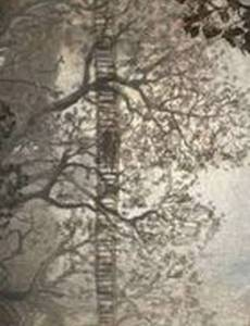 Дерево детства