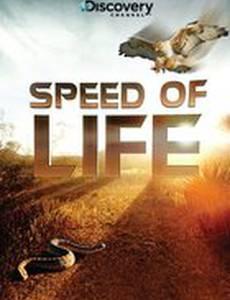 Discovery: Скорость жизни (мини-сериал)