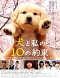 """Постер из фильма """"10 обещаний моей собаке"""" - 1"""