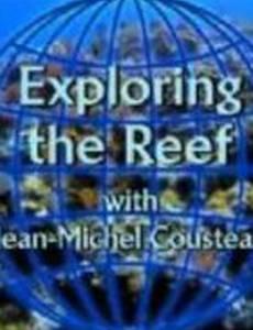 Изучение рифов (видео)