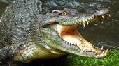 Фильмы про крокодилов