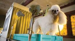 """Кадр из фильма """"Отель для собак"""" - 2"""