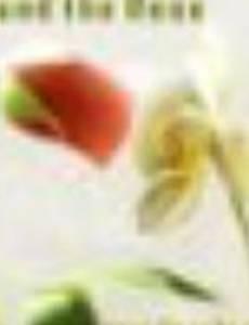 Орхидея и роза