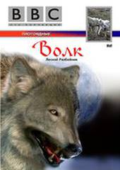 BBC: Волк