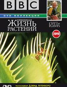 BBC: Невидимая жизнь растений