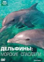 Дельфины: Морские спасатели