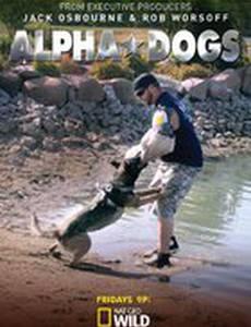 Собаки альфа