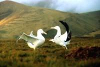 Кадр Птицы