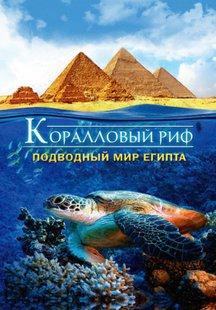 Коралловый риф : Подводный мир Египта (видео)
