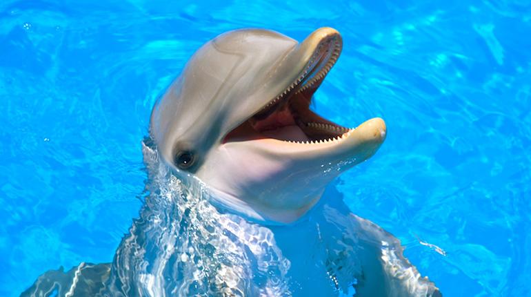Фильмы про дельфинов