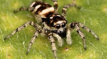Фильмы про пауков