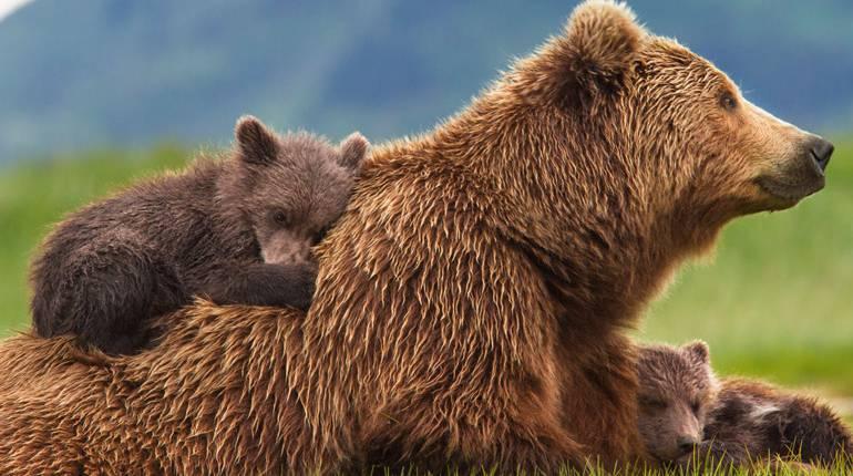 Фильмы про медведей