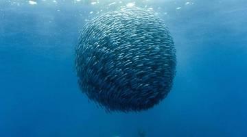 Фильмы про океан