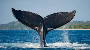 Фильмы про китов