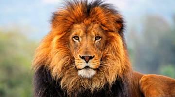 Фильмы про львов