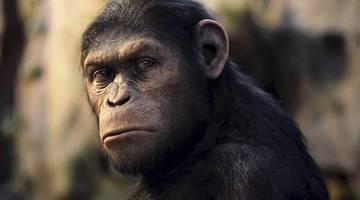 Фильмы про обезьян