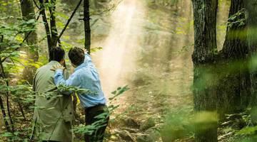 Фильмы про лес